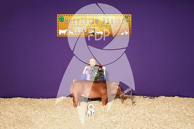 Breeding Hog Backdrops