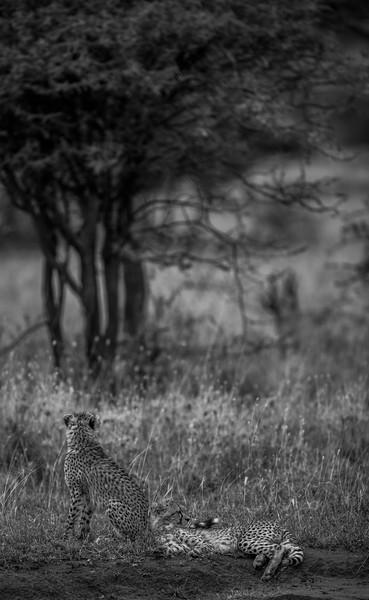 Tanzania_Feb_2018-1200.jpg