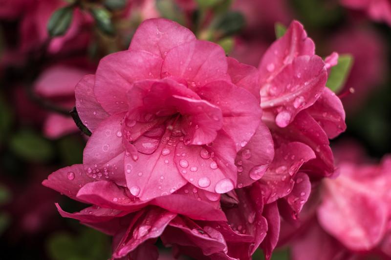 160501_45_6321_Flowers-1.jpg