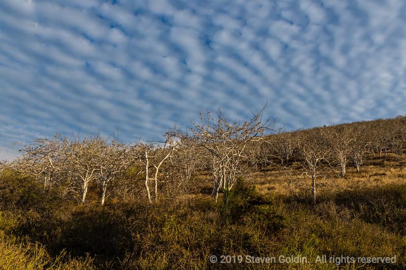 Galapagos 0719 SJGoldin-479.jpg