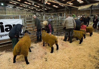 MTH Beeston Suffolks Show and Sale 7/11/2015