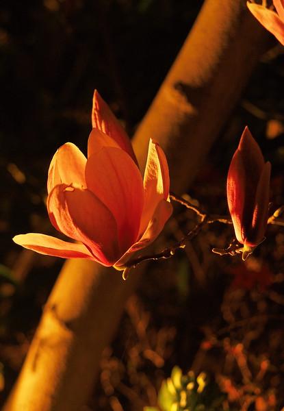 20190815_1839_0596 magnolia