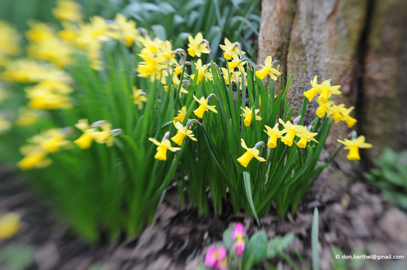 2009-04-10_010.jpg