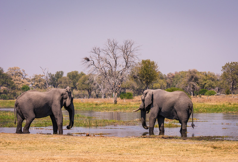 Botswana_June_2017 (2633 of 6179).jpg