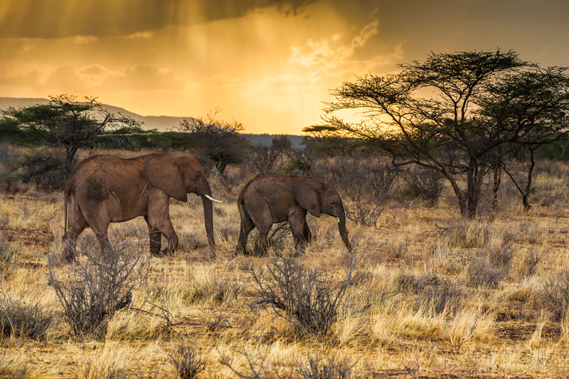 Elephants-11.jpg