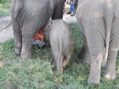ELEPHANT NATURE PARK 2013