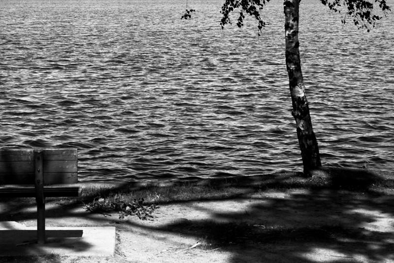 070625-016BW (Bench, Tree, Lake).jpg