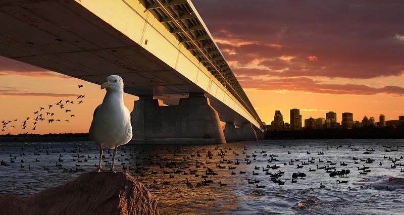 bridge-concorde.jpg