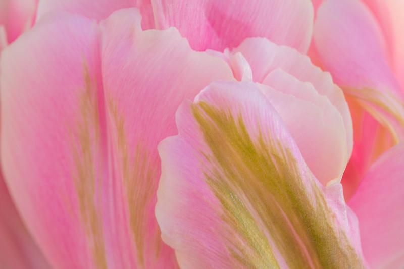 FineArt_Flowers_051520_0671.jpg