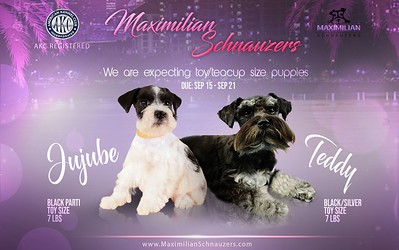 Jujube & Teddy Puppies, DOB 9/19/2020