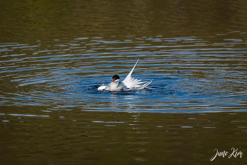 2020-05-12_Potter Marsh bird-_6109567-Juno Kim.jpg