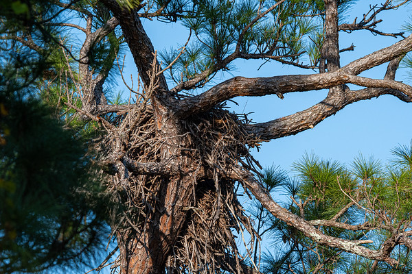 Bald Eagle Nest BE27 - November 30, 2019