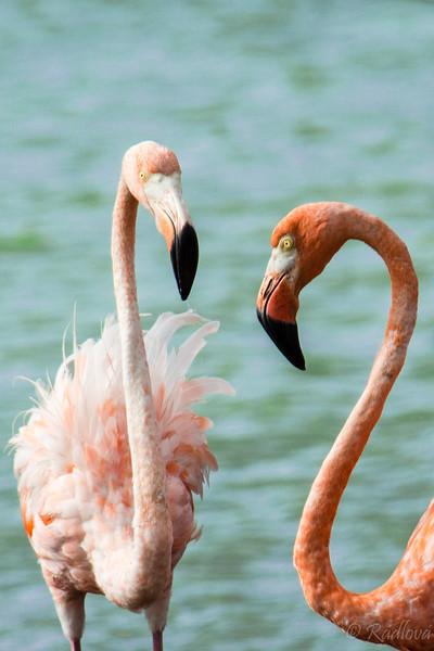 Flamingo Couple-2.jpg