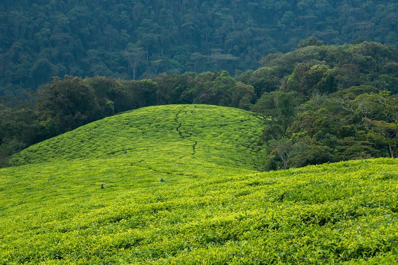 Nyugwe-Rwanda-15.jpg