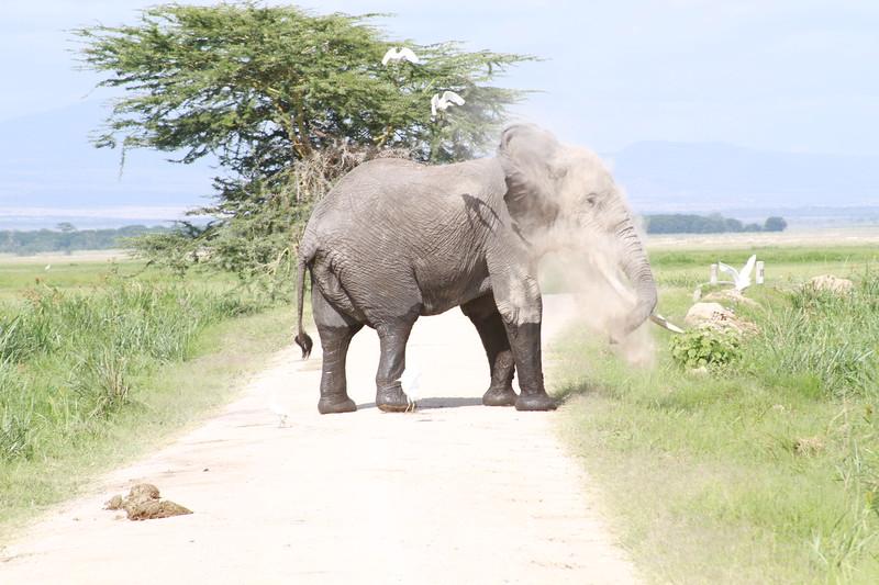 Kenya 2019 #2 874.JPG