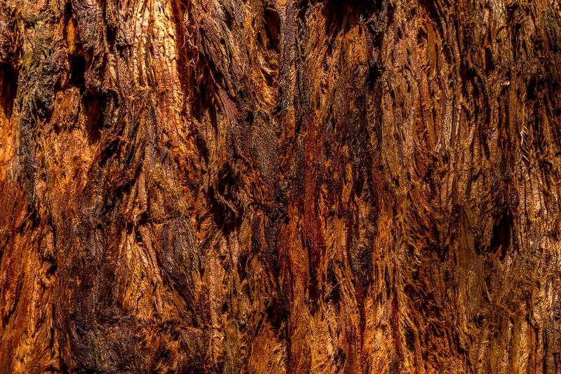 Rinde eines Redwoods im Whakarewarewa Forest