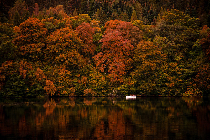loch faskally red trees.jpg