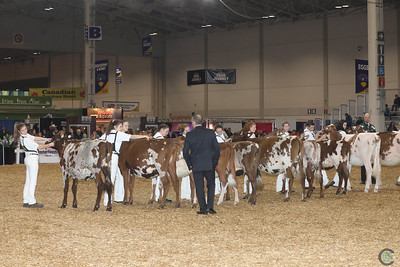 Classic Colored Breeds 2016