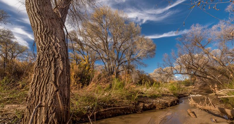 San Pedro River, AZ #6