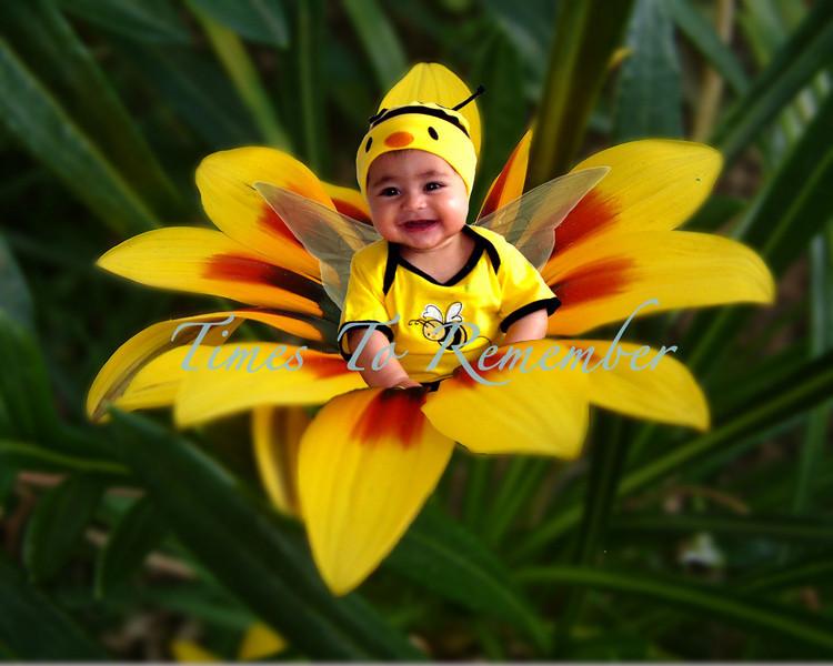 Bee on a flower copy.jpg