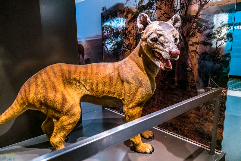 Australia-Museum-1379.jpg
