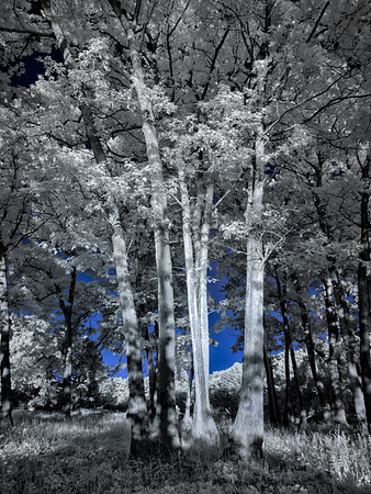 Cootes Paradise in Infrared