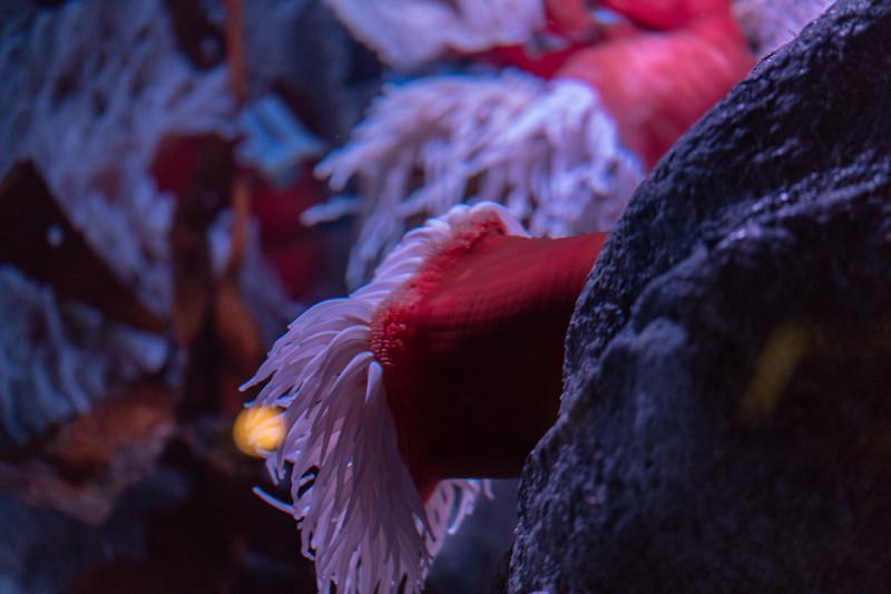 Monterey Bay Aquarium 2017