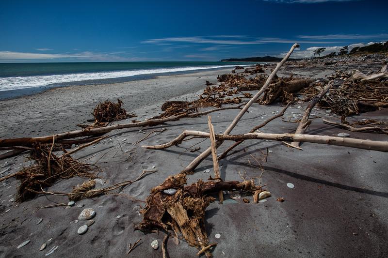 Driftwood beach, Bruce Bay