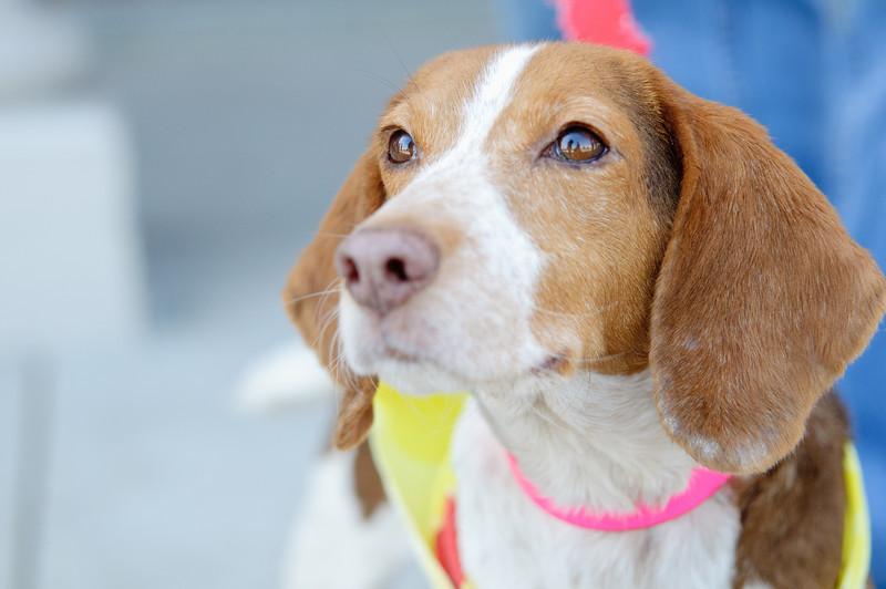 20110312 PetSmart Adoption Event-63.jpg