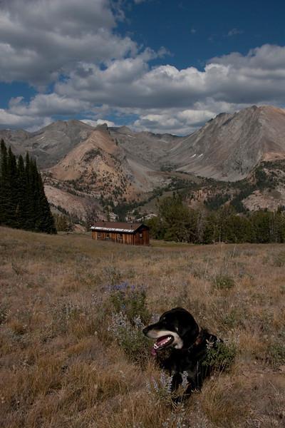 Dog at pio cabin
