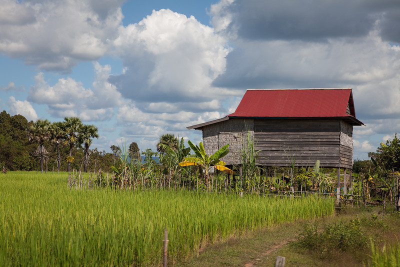 Along a rural road north-east of Angkor Thom, a stilt house sits in a rice paddy as some impressive clouds roll by.