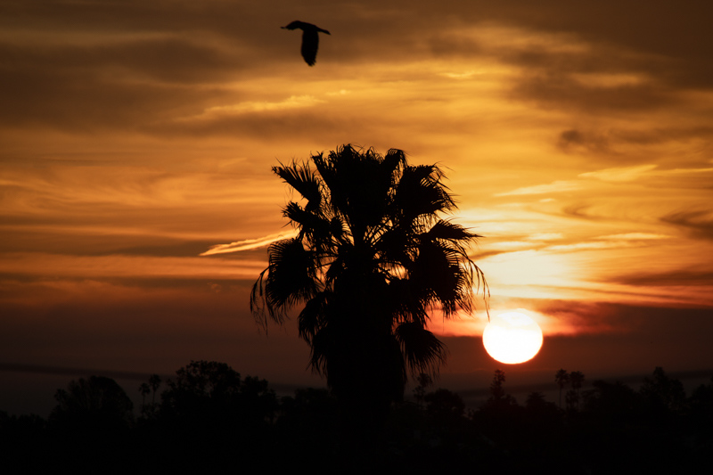 February 1 - A bird and the sun welcoming the new month.jpg