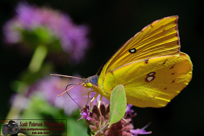 Butterfly Pavilion @ Rancho Santa Ana Botanic Garden