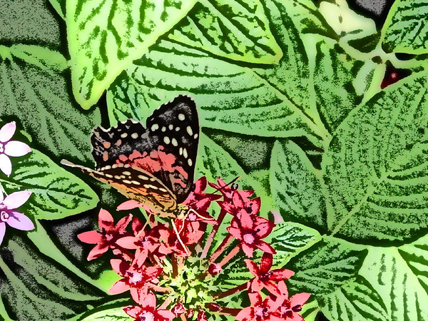 Old Tyme Butterfly Art