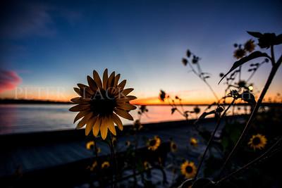 Blackeyed Sunset