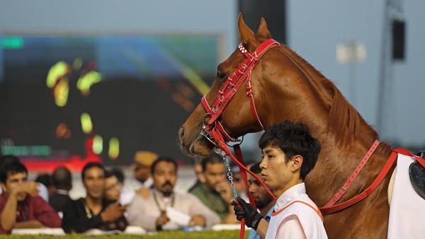 6 Dubai Golden Shaheen Gr1 1200m