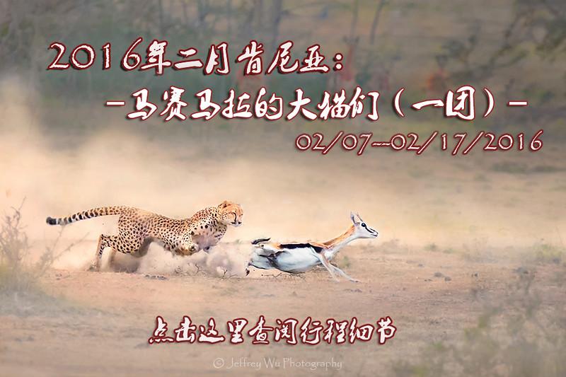 20162月猫copy.jpg