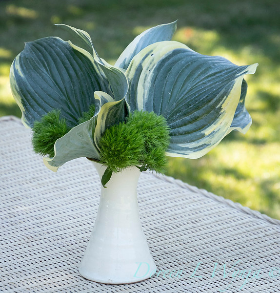 Hosta - Dianthus arrangement_2188.jpg