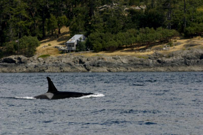 Whale watching 1.jpg