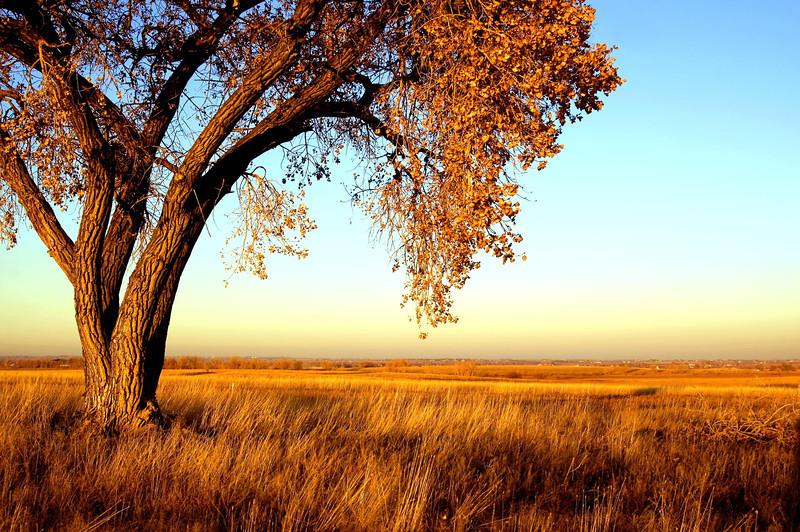 autumn field.jpg