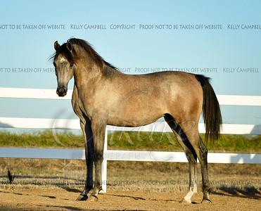 Rosecrest Arabians