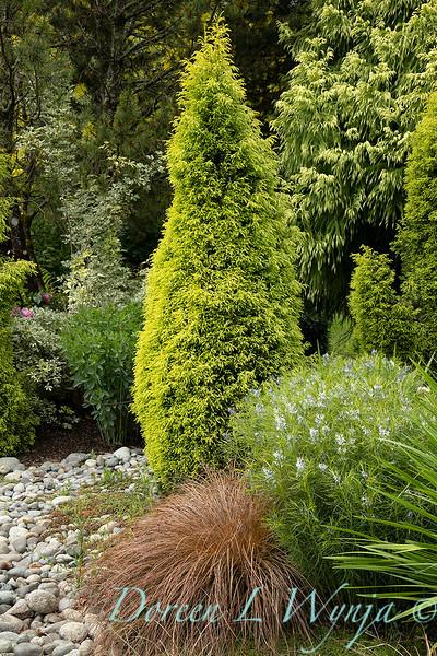 Juniperus communis 'Gold Cone' - Amsonia hubrichtii - Carex flagellifera 'Toffee Twist' setting_6905.jpg