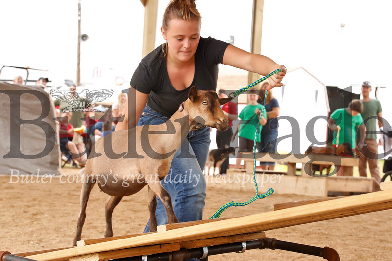 Meghan Thornton encourages her goat up the seesaw obstacle during competition at the Farm Show Wednesday. Seb Foltz/Butler Eagle