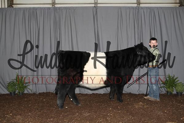Heifer Backdrop