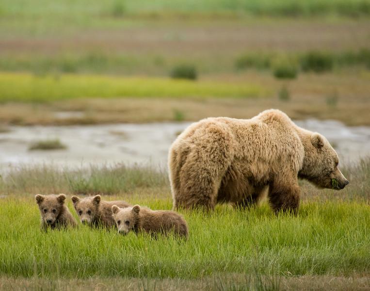 Alaska-71.jpg