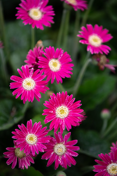 Spring Flowers B-260.jpg
