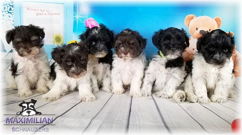 Maddie Pups 017.jpg