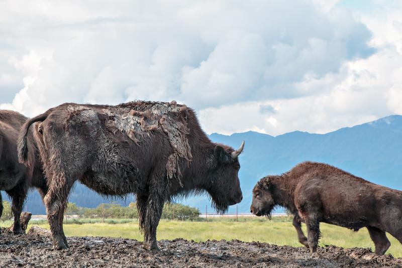 2014 08 18_Alaska_0705_edited-1.jpg