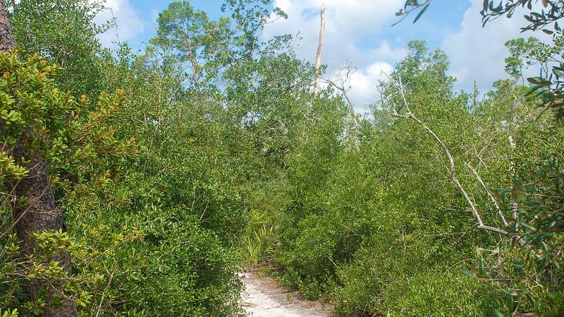 Lake Eaton Sinkhole Trail
