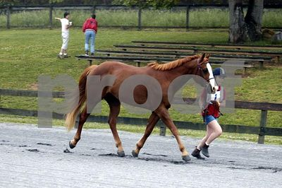 2005-05-15 Pony Club Eventing
